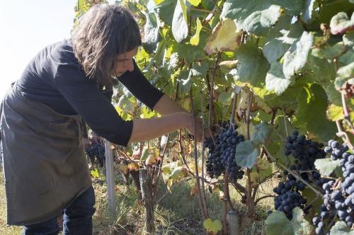 Christine Dupuy vigneronne dans le Madiran