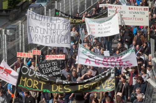 Manifestation anti-ours