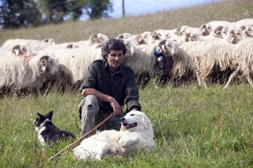 Pastoralisme dans les Pyrénées Béarnaise.